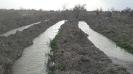 آبیاری باغات میلاجرد به برکت بارشهای بهار